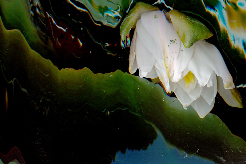 Giverny of the Midwest (detail) – M29