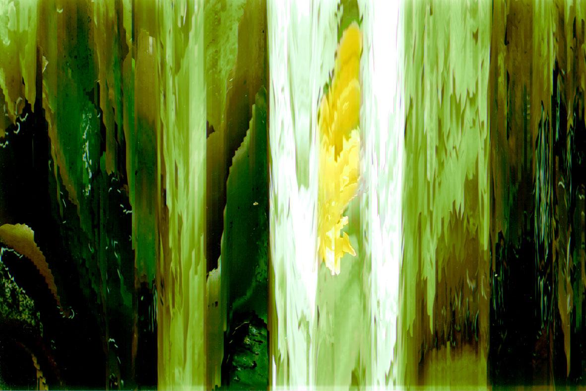 Emmarentia Lilies 2