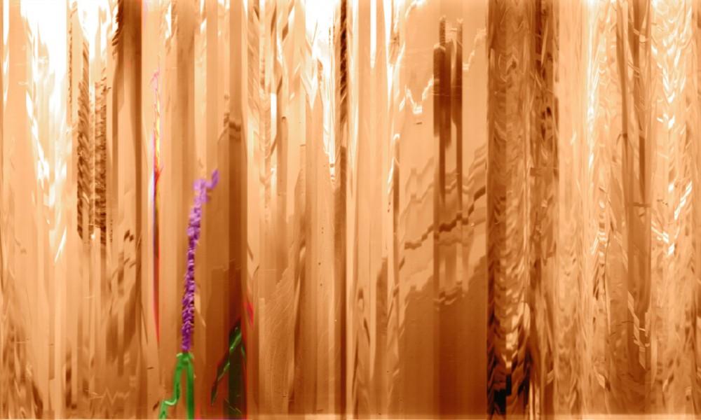 subtle reeds