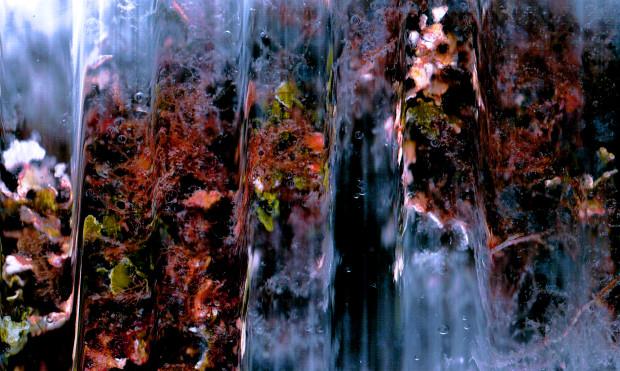 medium-500x300-composition